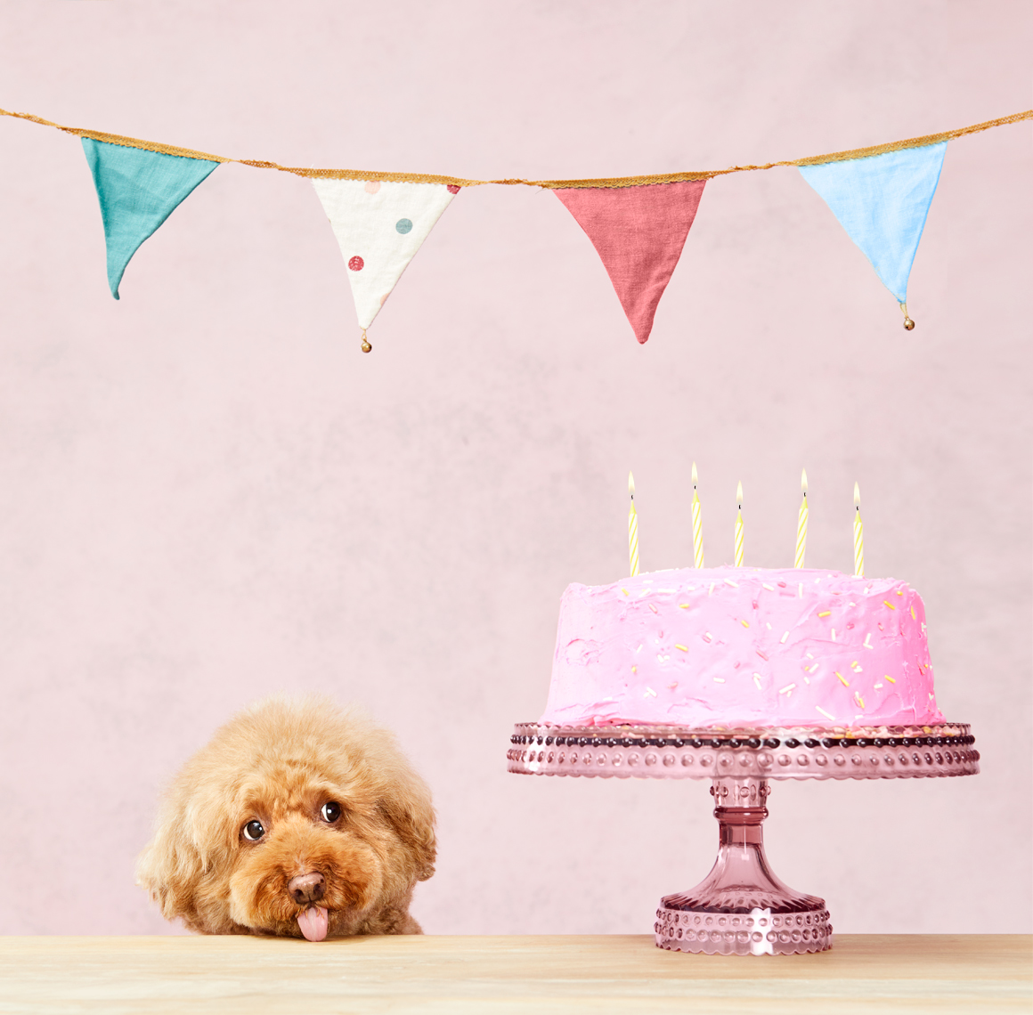 Poodle birthday cake and flags