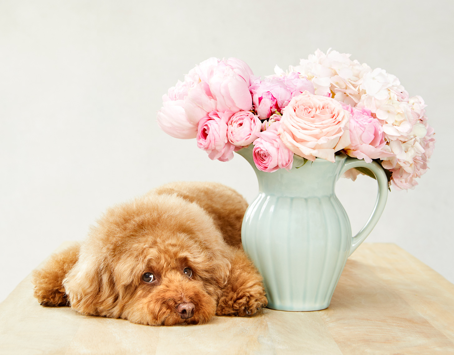 Poodle with flowers
