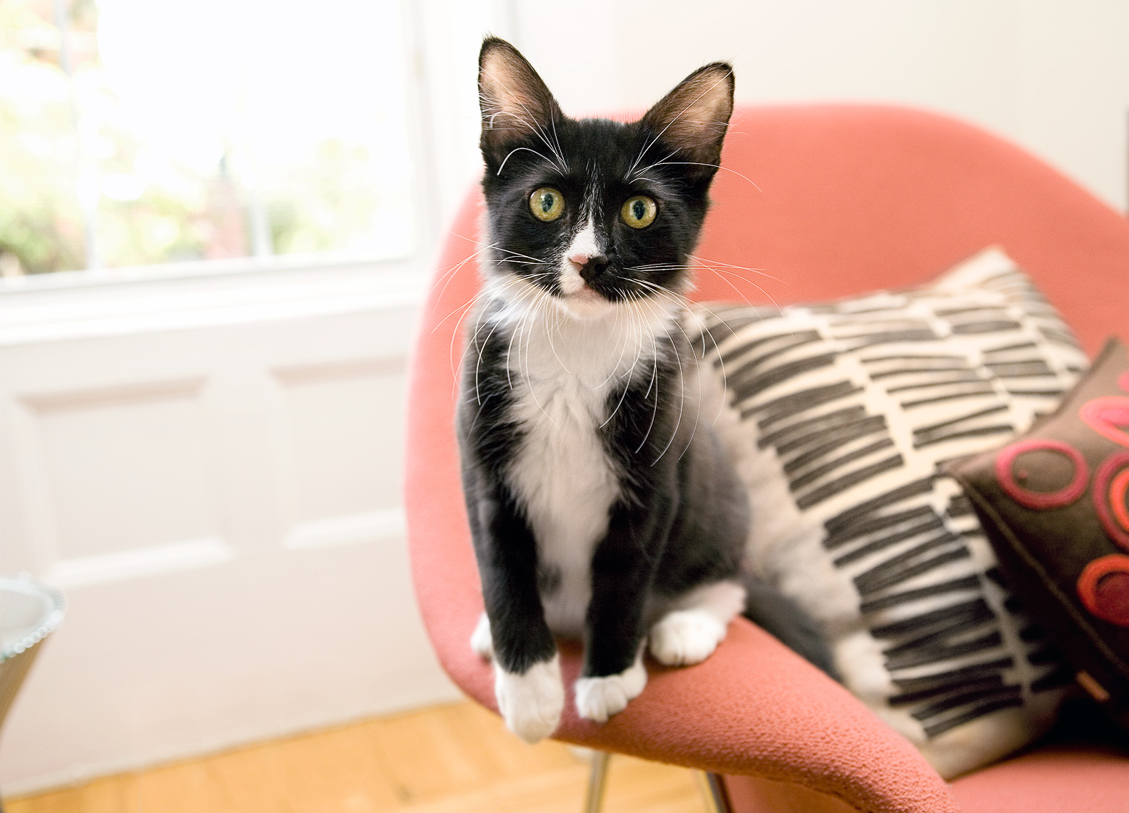 Kitten on chair