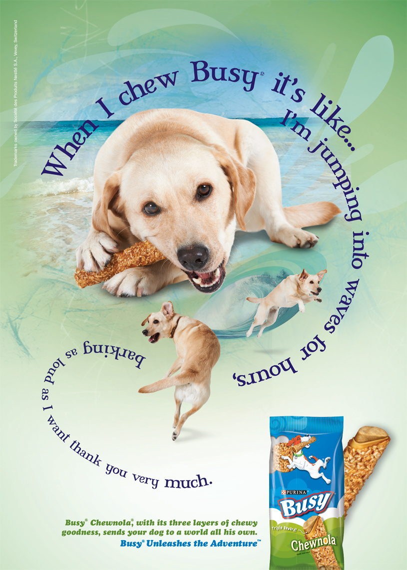 Labrador chewing treat purina