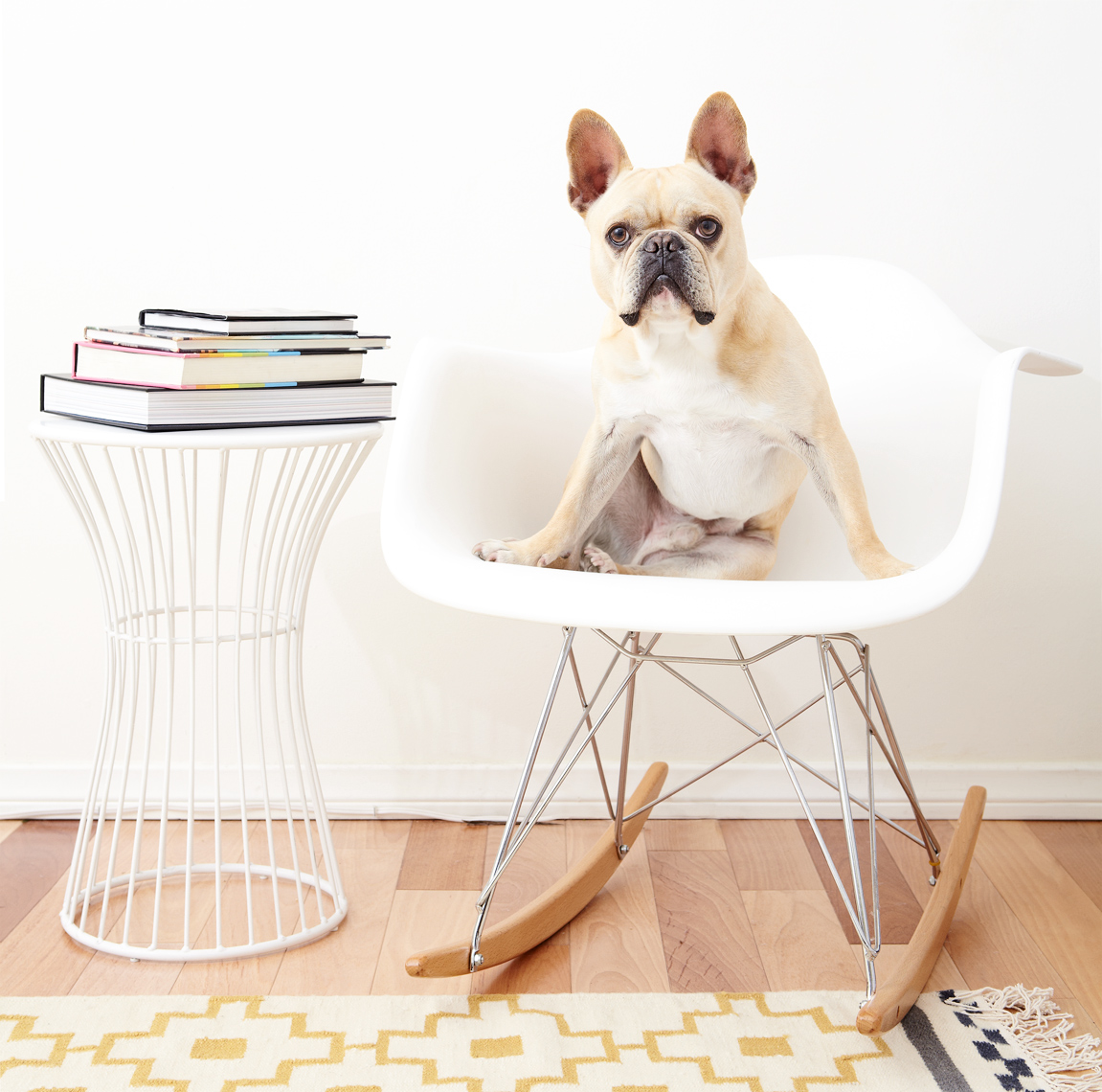French bulldog on eames chair