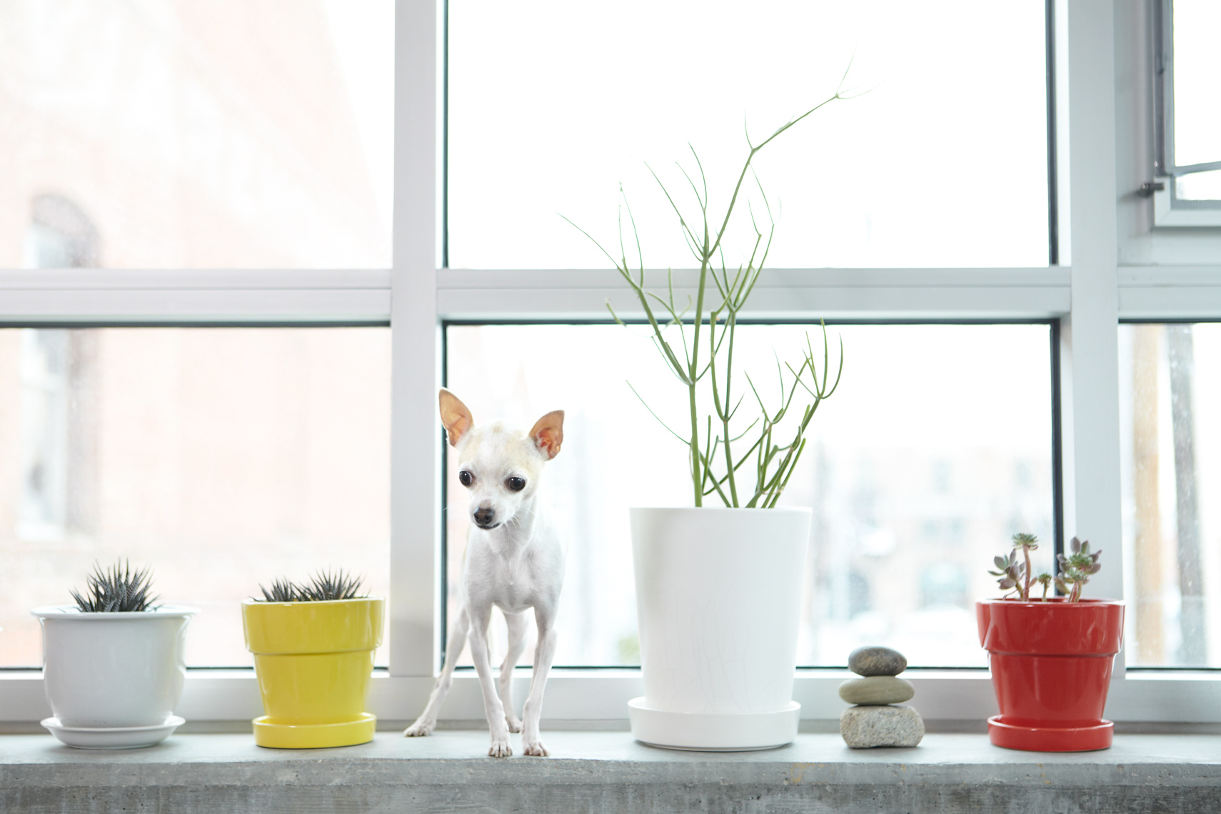 Chihuahua with plants