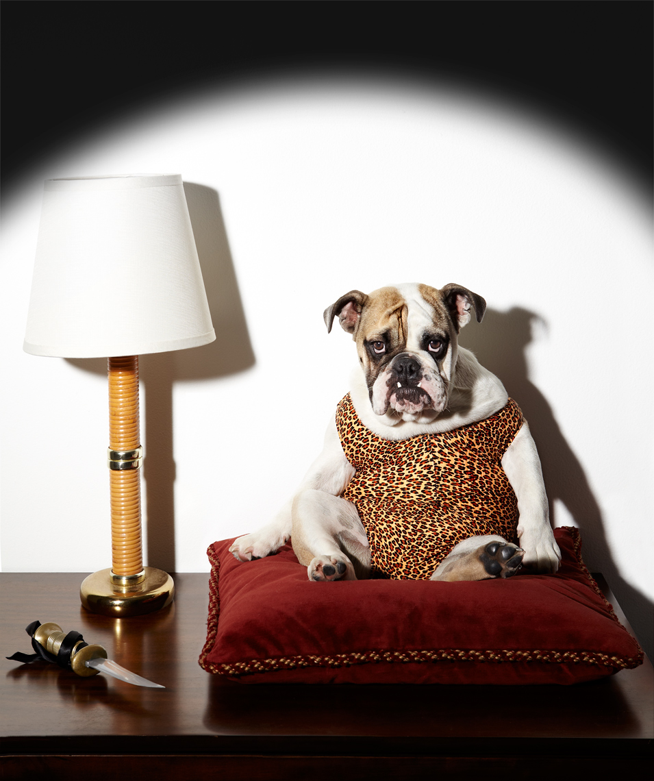 Bulldog on pillow emulation