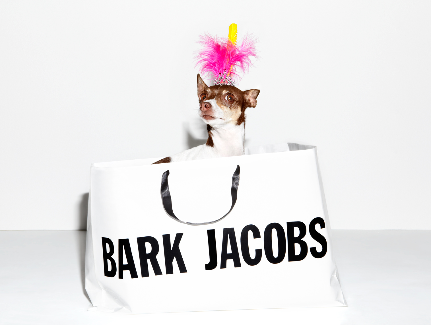 Rat terrier marc jacobs