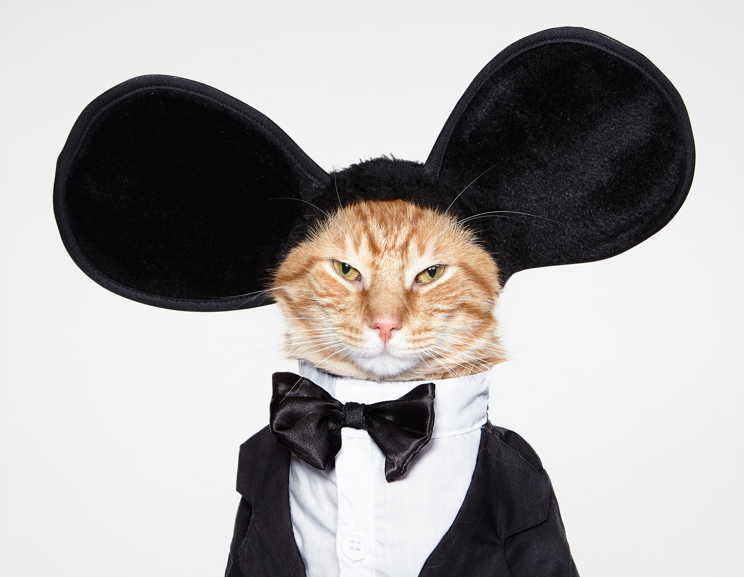 Cat in tuxedo and mouse ears
