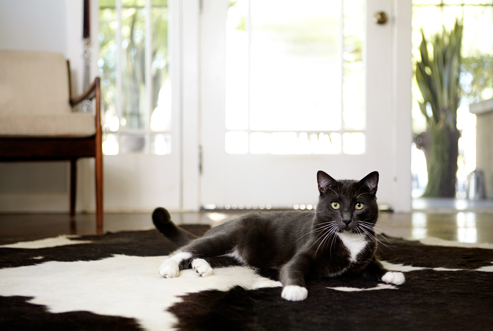 Cat on rug at entry way