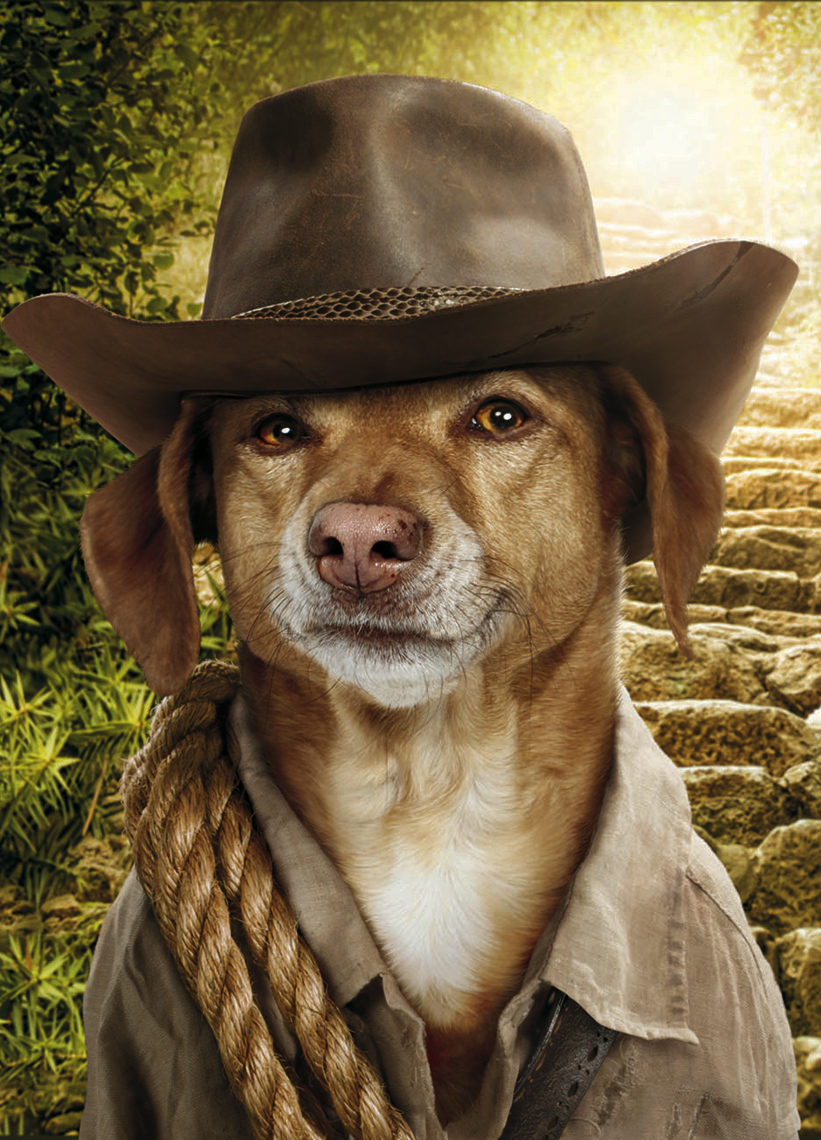 Vizsla dog dressed as indiana jones