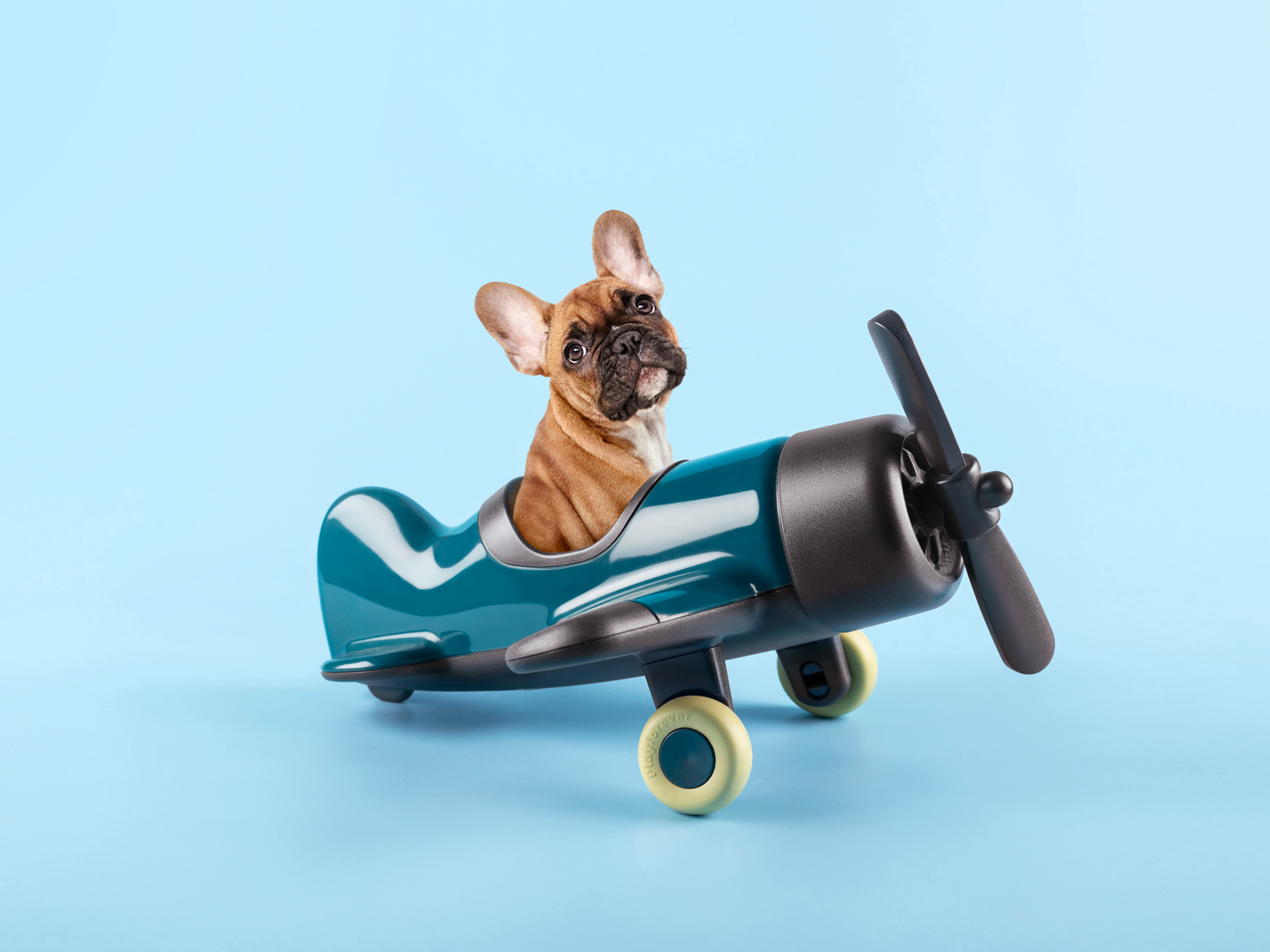 French bulldog puppy in a toy airplane