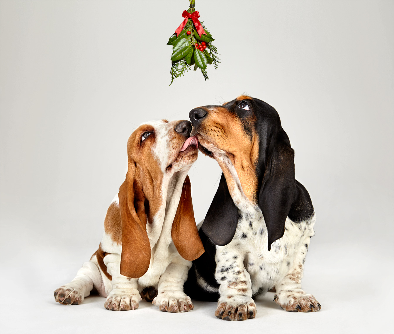 141011-BassetHound-0505-MistleToe