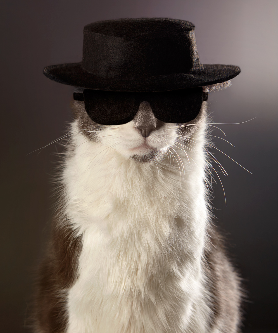 Cat as Heisenberg breaking bad