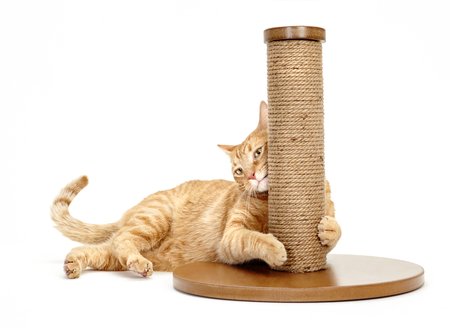 orange cat with scratching post