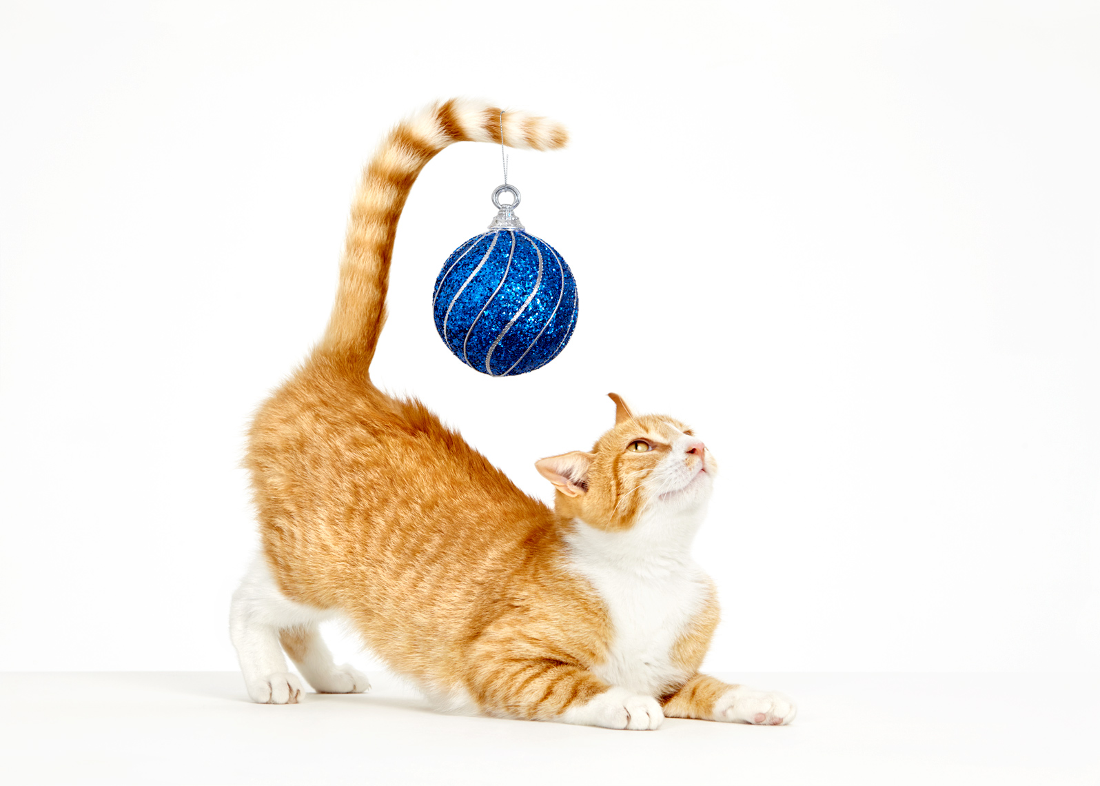 Cat with christmas ornament