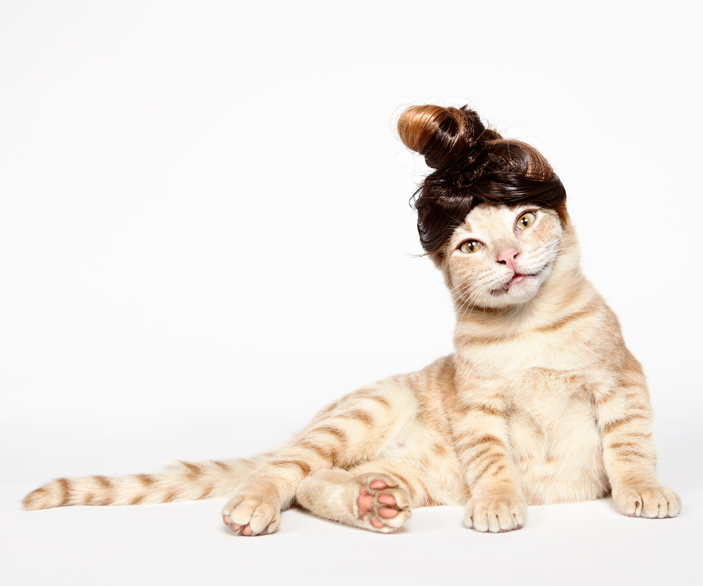 Cat in man bun wig