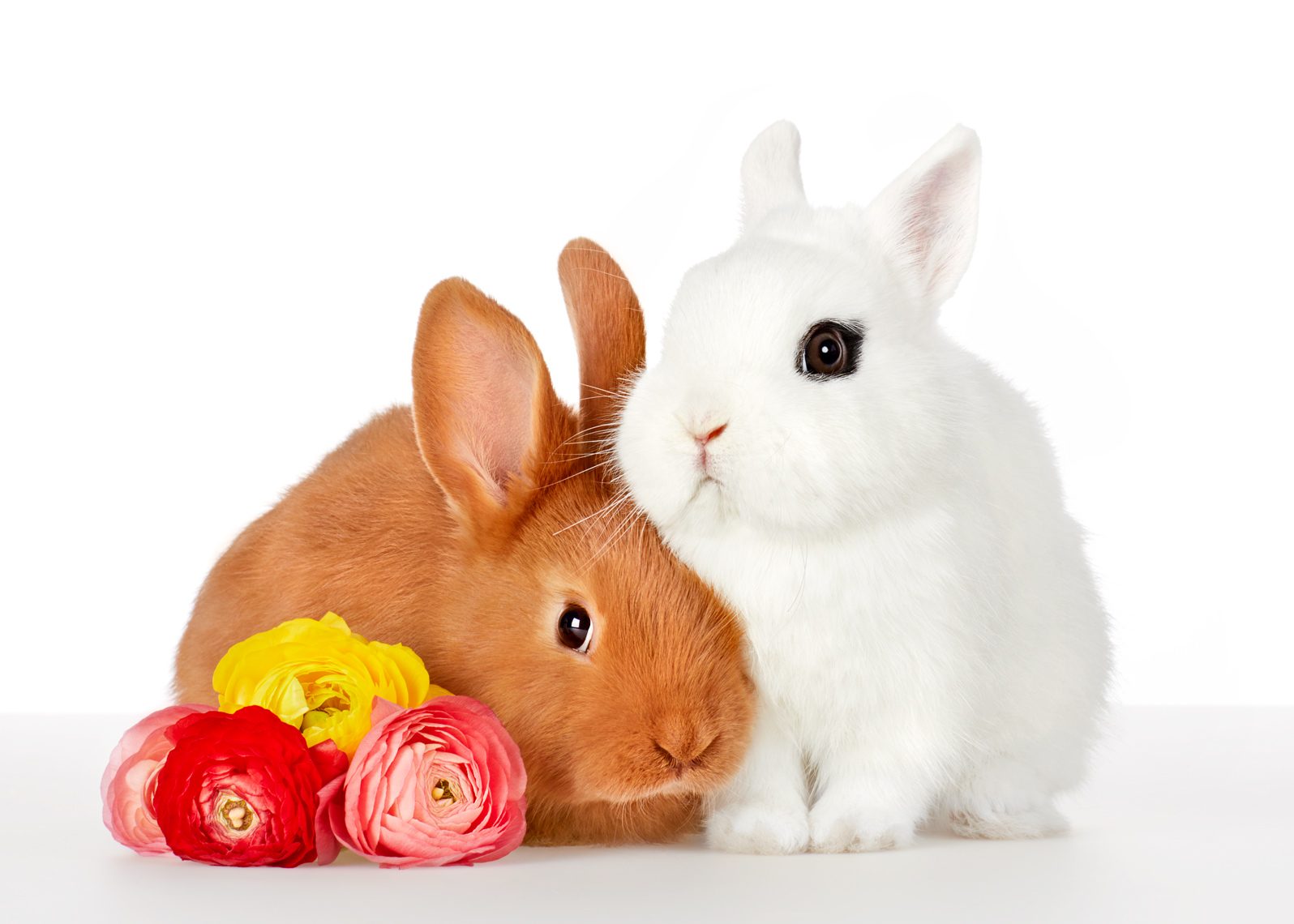 white and brown Bunnies with flowers