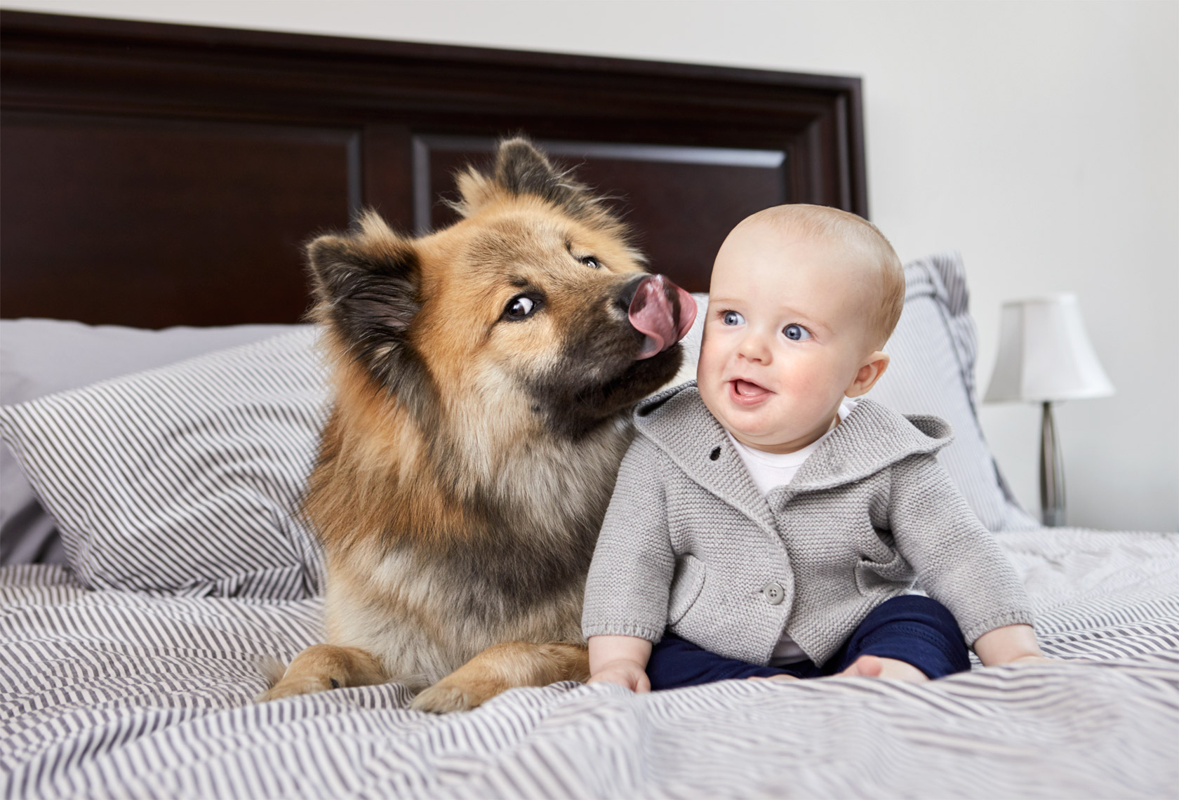 Baby and Large dog