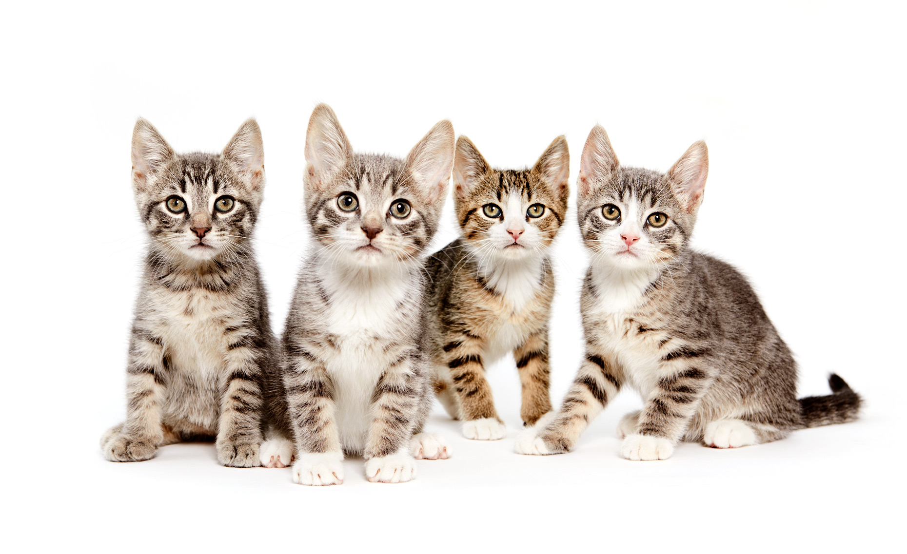 Line of four kittens