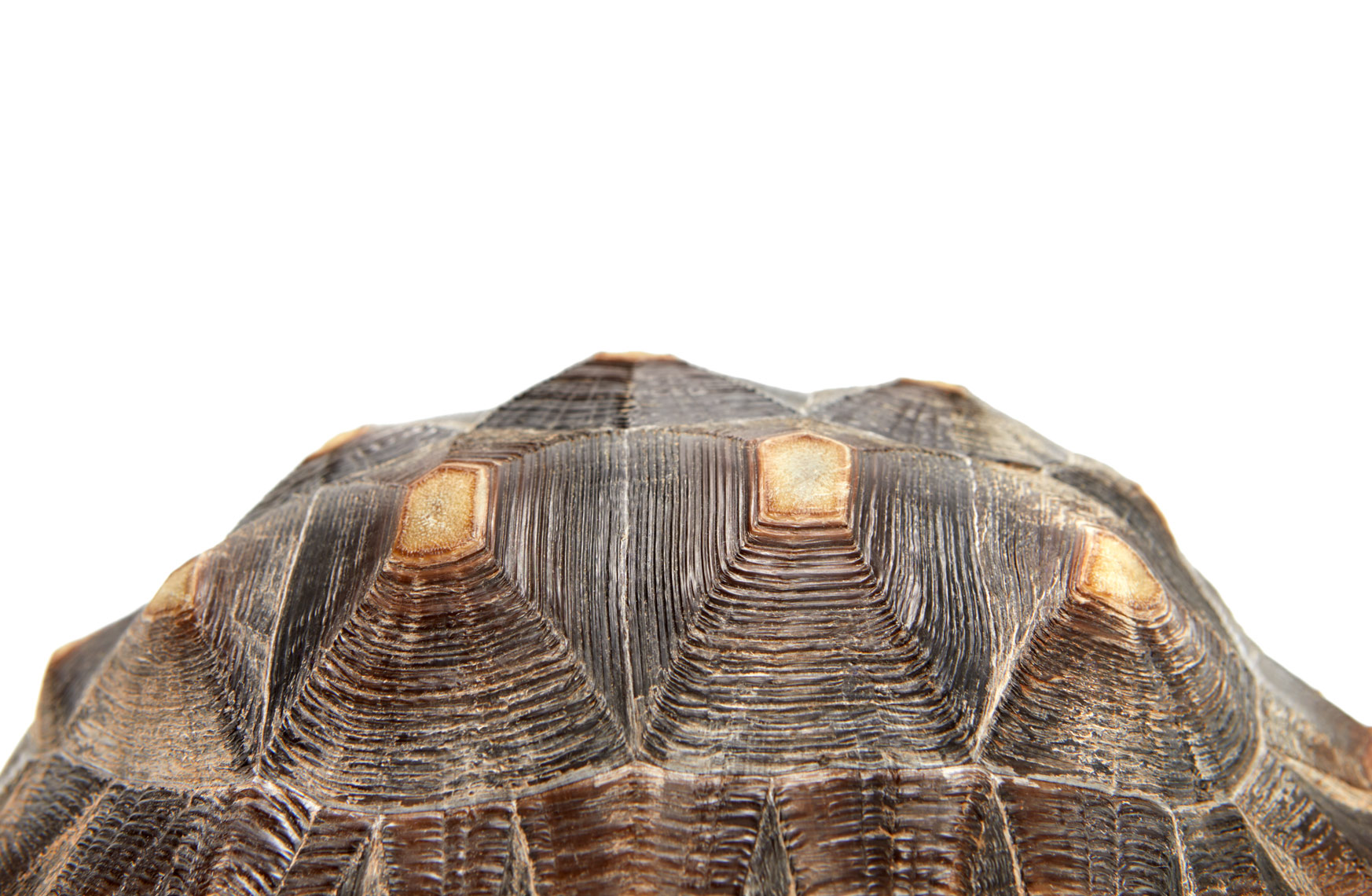 Turtle shell closeup
