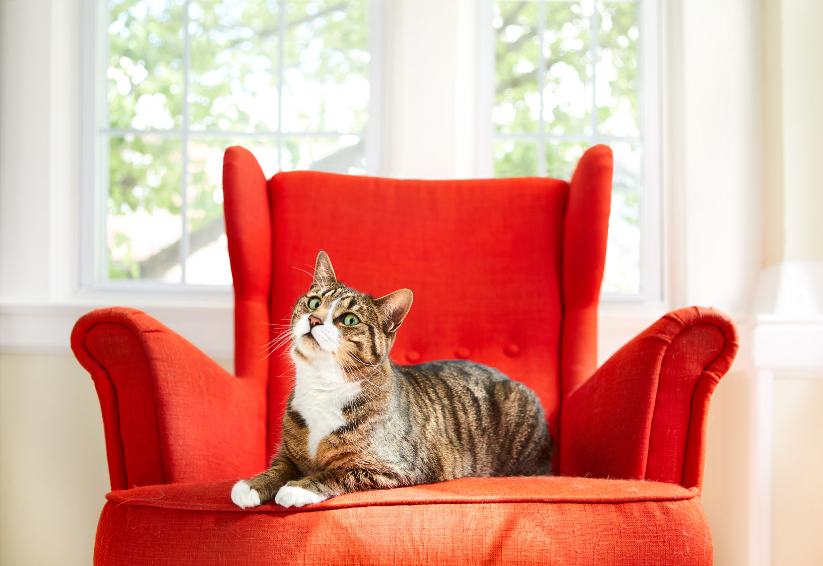 Cat on red chair