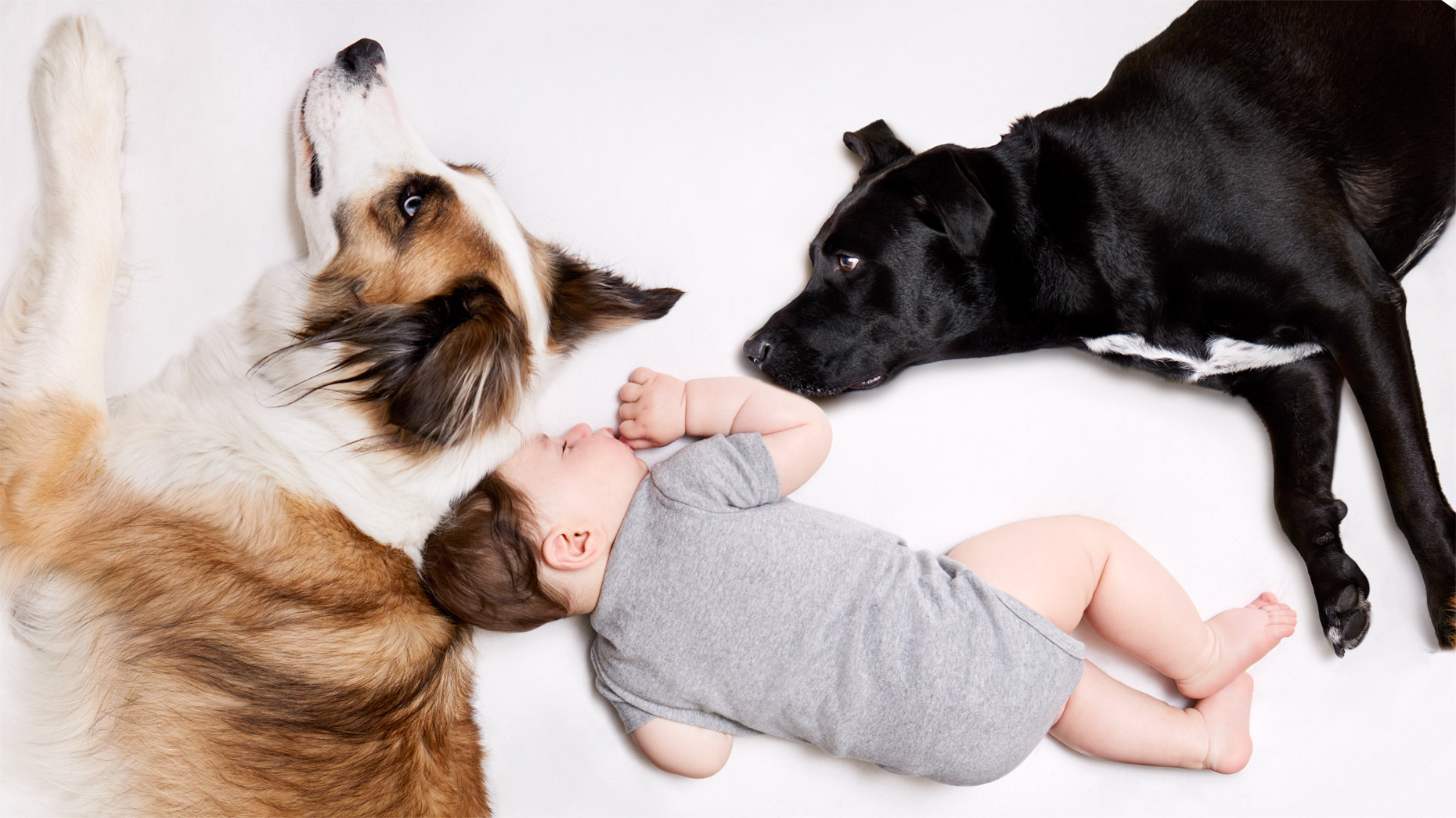Baby laying on bed with dogs
