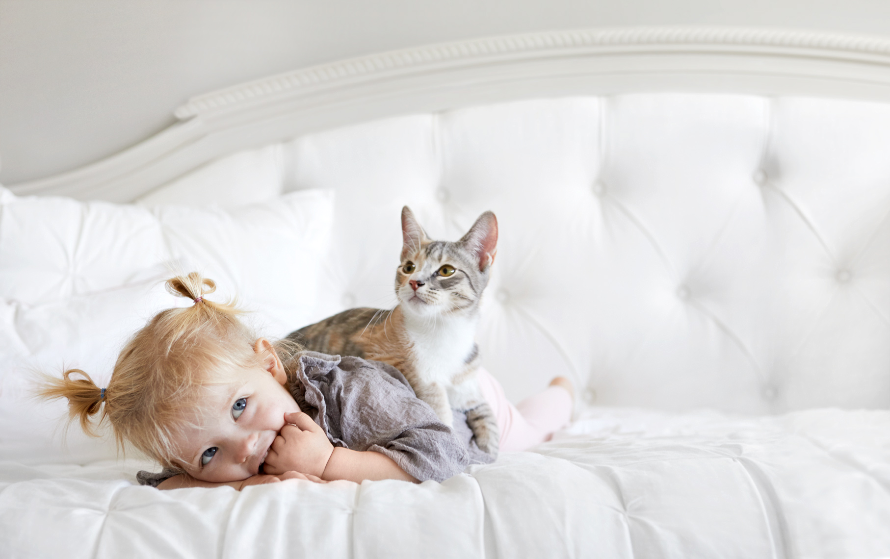 Toddler on bed with kitten