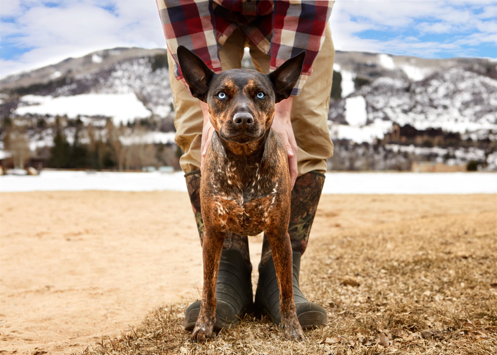 Cattle dog with man in boots
