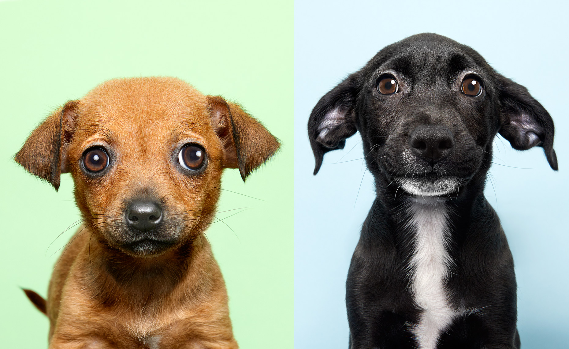 Puppy portraits on colorful backgrounds