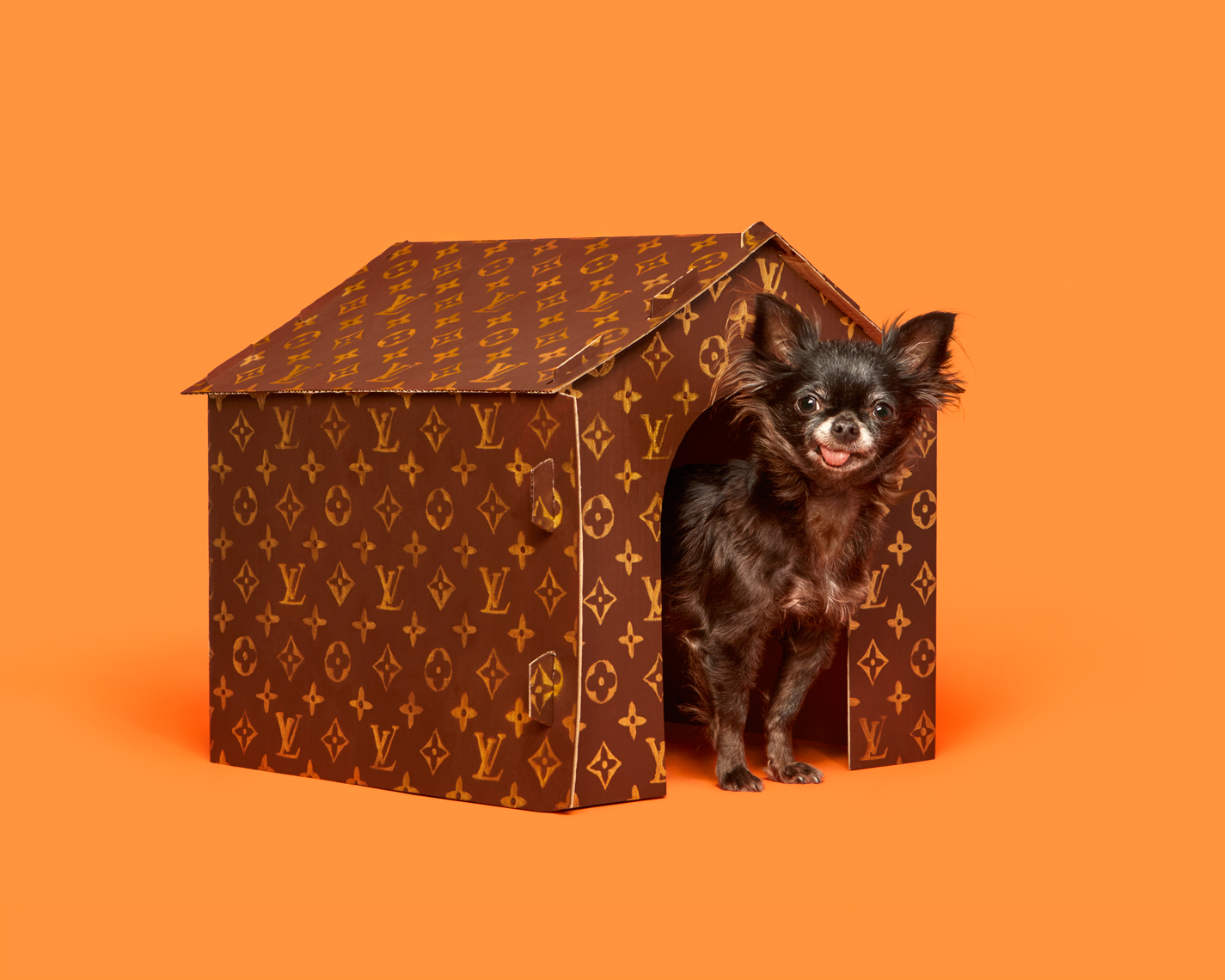 Chihuahua and Louis Vuitton Dog House