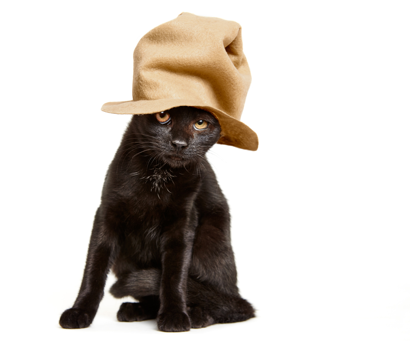 Kitten in Pharrell hat