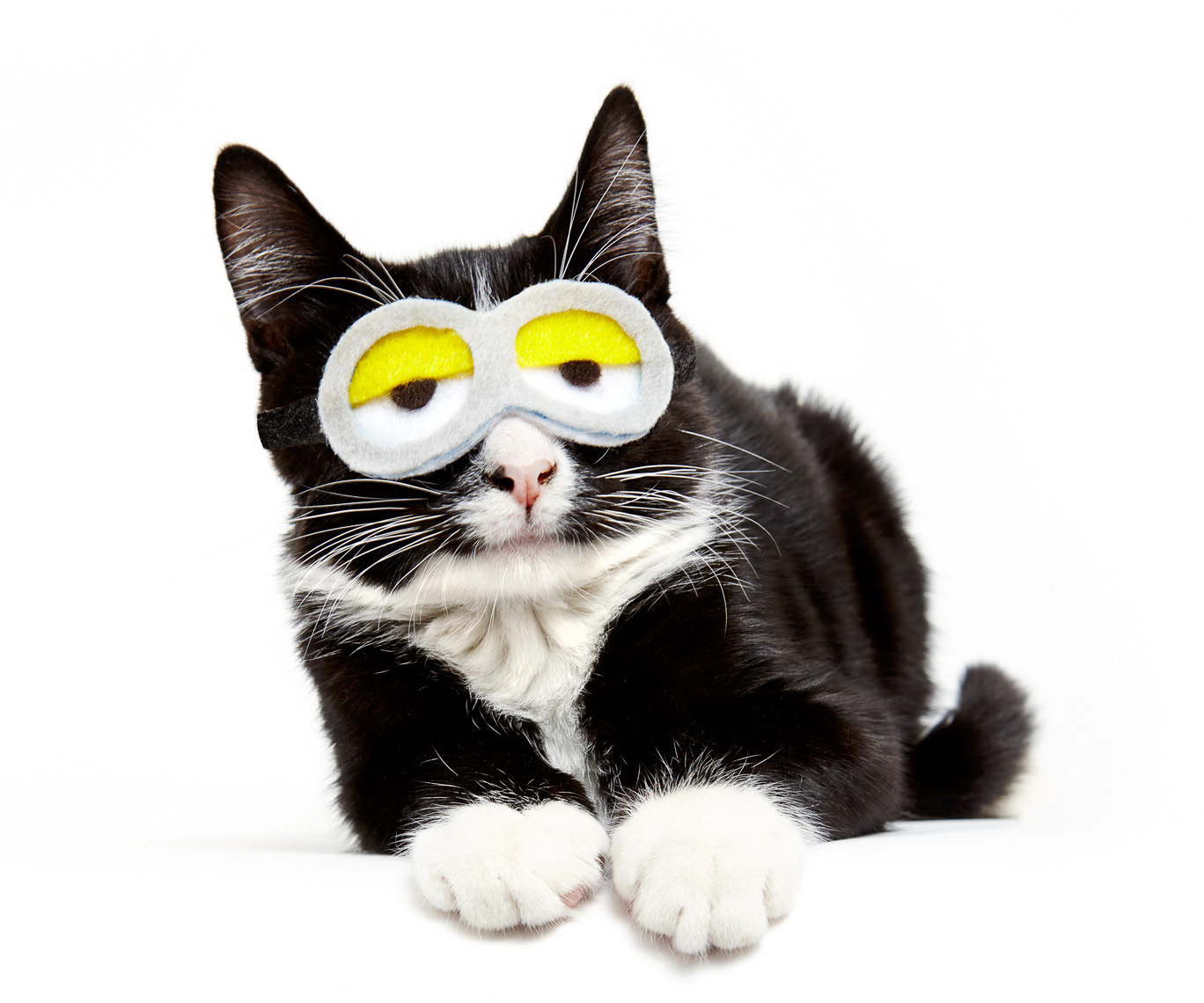 Kitten minion goggles