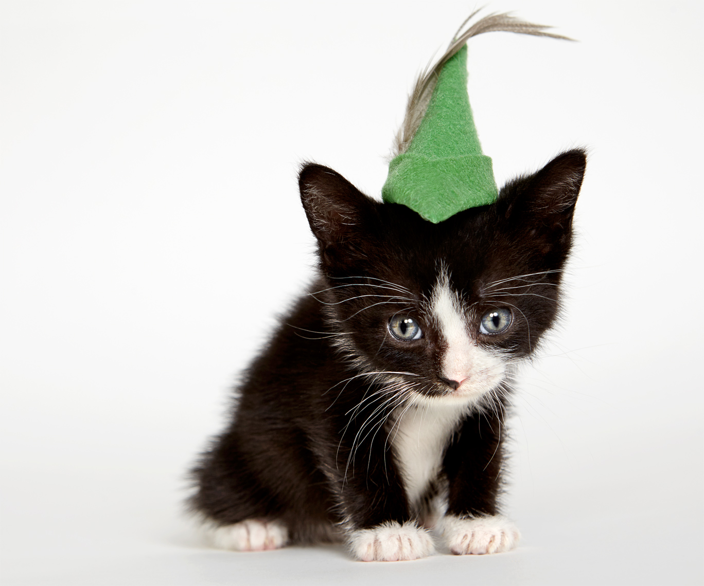 Kitten in robin hood hat