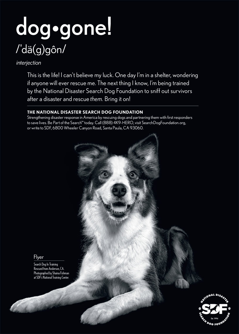 Search Dog Foundation Advertisement