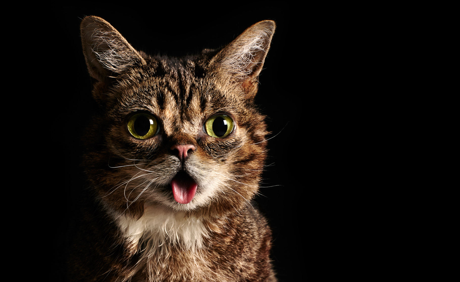 Lilbub-Double-013