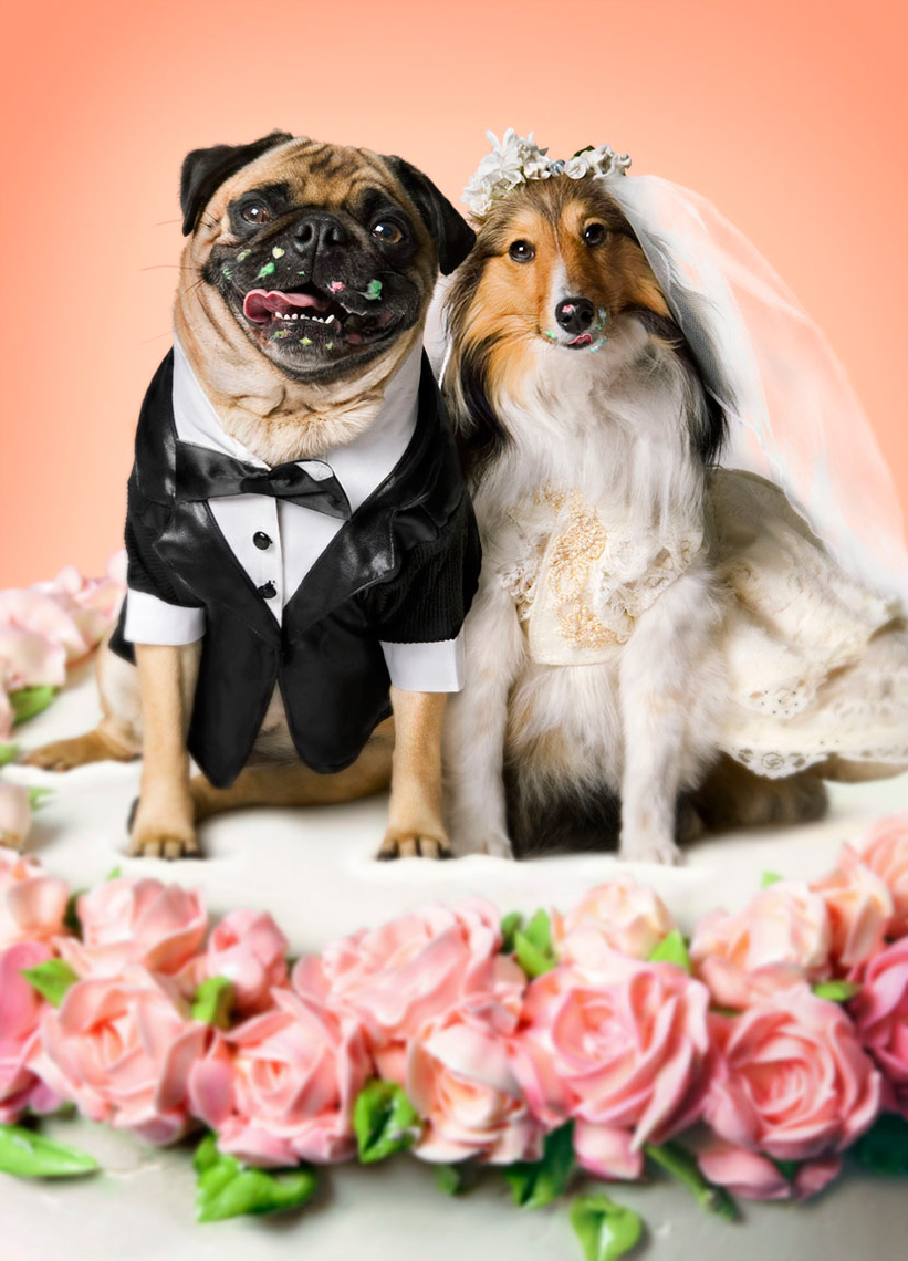 wedding dogs on cake married